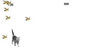 Cat chasing birds